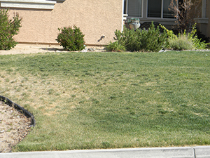 dead grass aeration lawn maintance