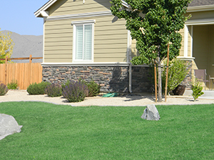 fertilize healthy green lawn